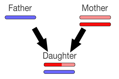 recombination2.png